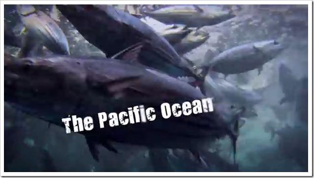 Pesca-oceanica-skipjack-tuna