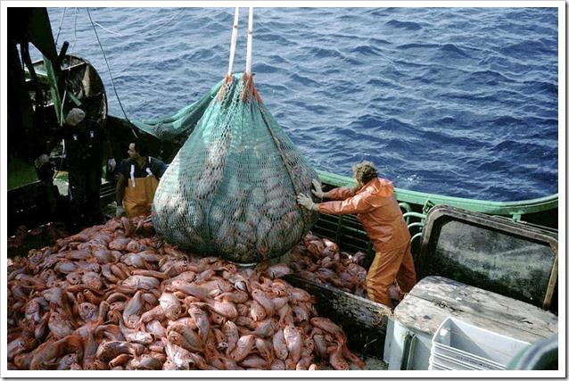 pesca industriale _109842 foto  © AFMA