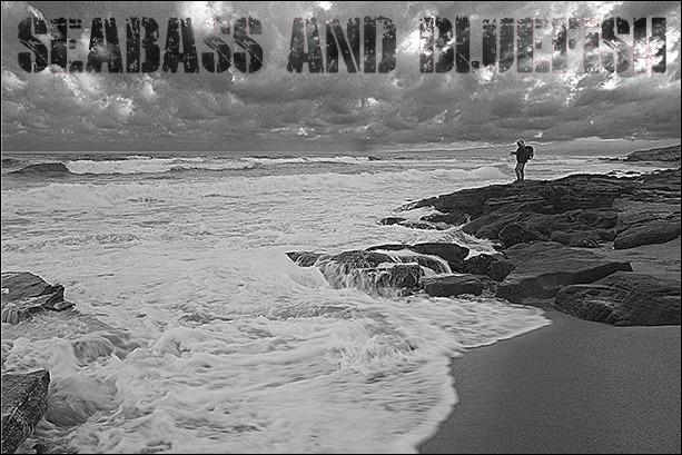 SEA-BASS-&-BLUEFISH-SPIN--AL
