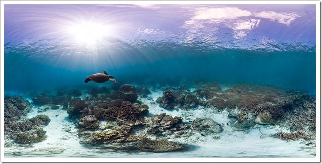 360-Turtle-immagine