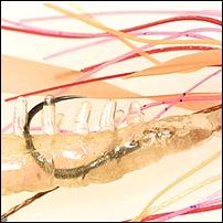 Midori-Dango-particolare-innesco