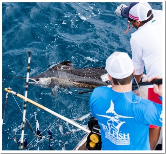 TBF tag sailfish Costarica