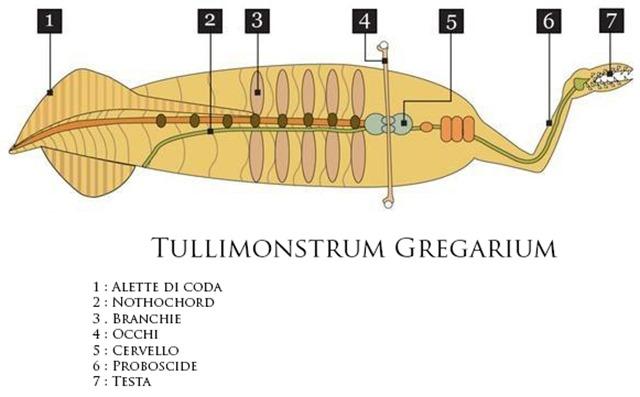 Tullimonstrum-Gregarium