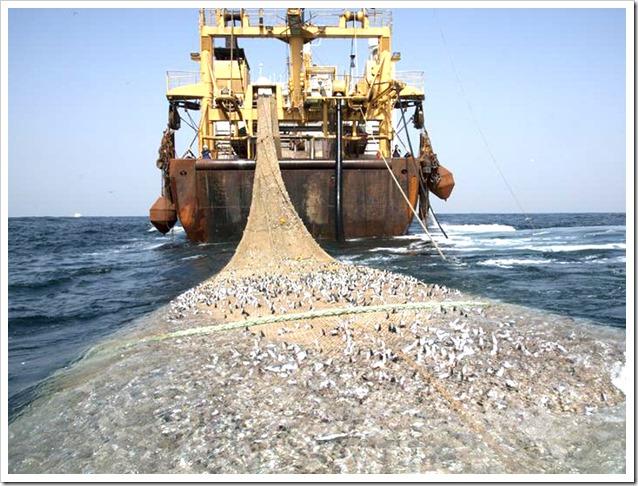 pesca-strascico