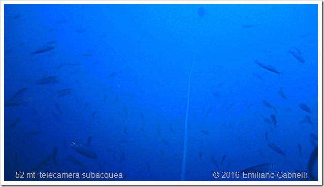 branco-pesce-foraggio