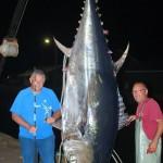 Record Giant Bluefin Tuna