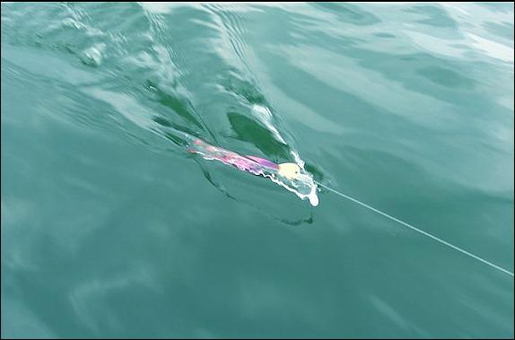 JACKALL-Riser-Bait-008-nuoto-a-galla