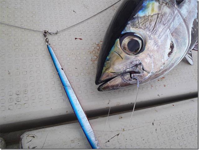 EBING tuna