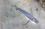 Nada-Sparrow-recuperato.jpg