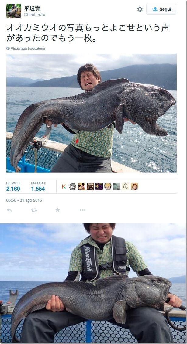 Fishoppatori jap