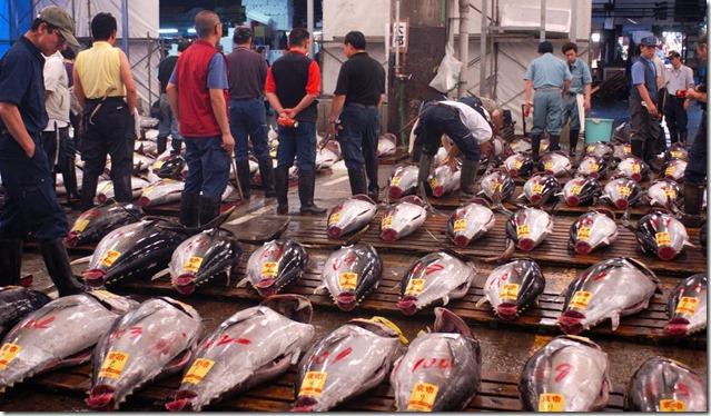 tsukiji-market-swim-with-tuna