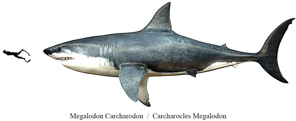 Carcharodon Megalodon, SHARK il primo Squalo
