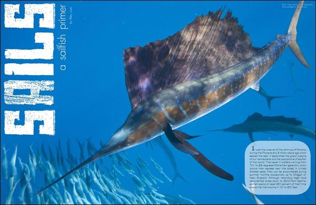 GAFF-magazine-sails