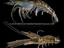 LIVETARGET-Fleeing-Shrimp.jpg