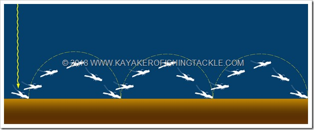 LIVETARGET-Fleeing-Shrimp-movimentoa-saltelli