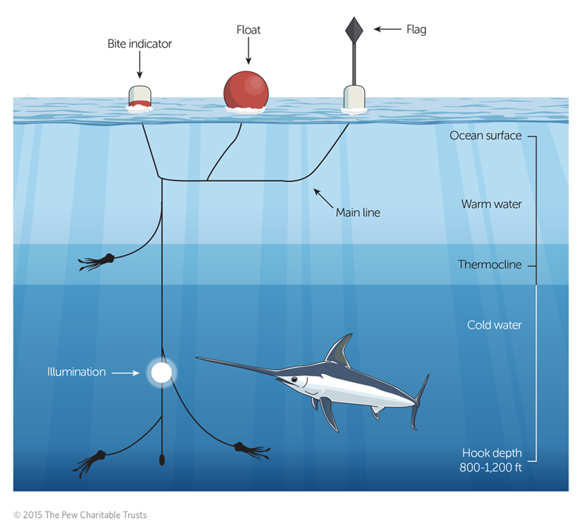 In USA lenze di profondità per Pescispada