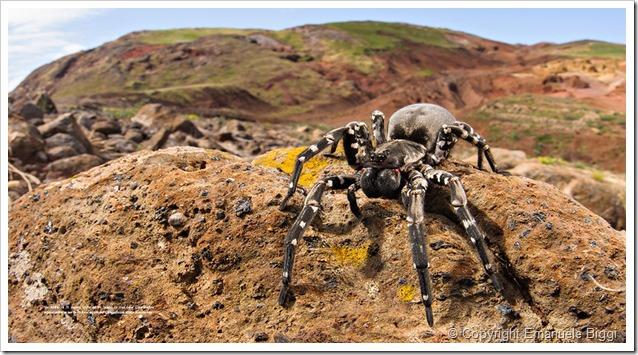 predatori-del-microcosmo (1)