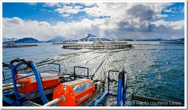 Lerøy_Mikroalger i fiskefôr