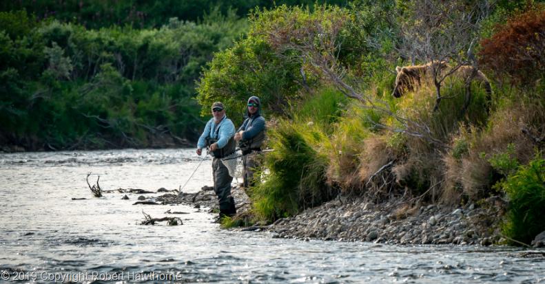 A pesca con l'orso