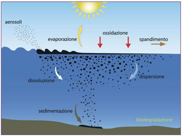 Processi degenerativi sversamento idrocarburi in mare.