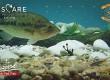 molix-soft-bait-pescare-show-2020_moment