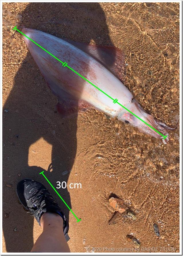 Calamaro record spiaggiato 3