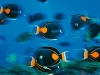 ng-achilles-tang-line-islands_-photo-brian-skerry