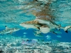 ng-blacktip-bluefin-twinspot-underwater_phpto-brian-skerry