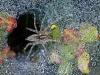 ng-spider-dew-macro-dallas_photo-fay-stout