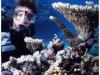 australia-lizard-island-coralli-di-ogni-forma-e-tipo-a-ribbon-reef-10