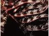 australia-lizard-island-le-filiformi-appendici-di-un-crinoide
