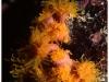 australia-lizard-island-polipi-del-corallo