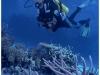 australia-lizard-island-ribbon-reef-10-a-spasso-tra-i-coralli