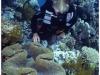 australia-lizard-island-tridacna-gigas-a-clam-beds