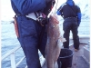 13-lofoten-lofoten-wccf-a-good-catch