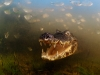 big_lfoto-naturalistiche-uciano-candisani-brazil-into-the-mouth-of-the-caiman-veolia-environnement-wildlife-2012