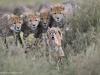 foto-naturalistiche-big_gregoire-bouguereau-practice-run-veolia-environnement-wildlife-2012