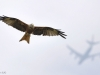 foto-naturalistiche-big_owen-hearn-uk-flight-paths-veolia-environnement-wildlife-2012