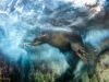 luisjaviersandoval_wildlifephotographeroftheyear_impressionswinner-900x600