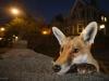 samhobson_wildlifephotographeroftheyear-900x600