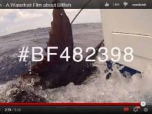Waterlust film Billfish Foundation