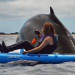 Wale-Kayak.jpg