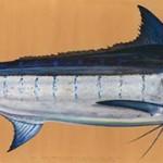 James-Prosek-Marlin-featured-slider