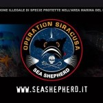 operazione-siracusa Seashepherd
