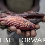 326702-e1440400714972-fish-1.jpg