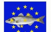 Petizione-europea-contro-stop-alla-pesca-spigola.jpg