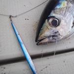 EBING-tuna.jpg