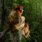 Wildlife-Photographer-of-the-Year-2018.jpg