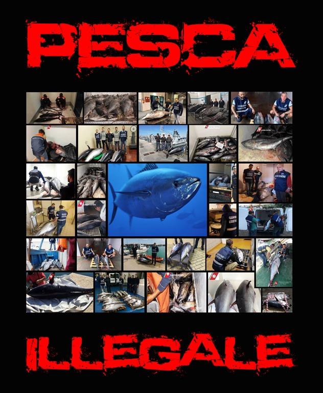 Pesca Illegale Tonno Rosso