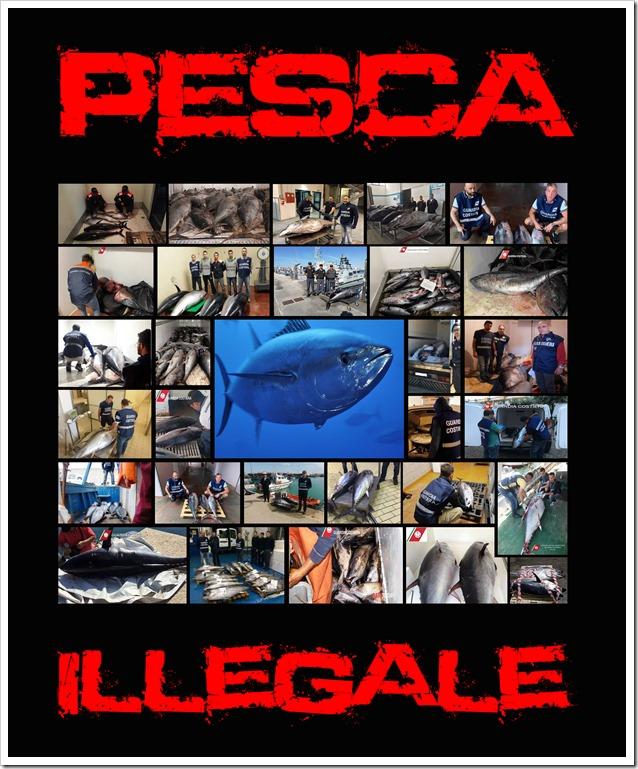 Pesca-Illegale-tonno-rosso-cover